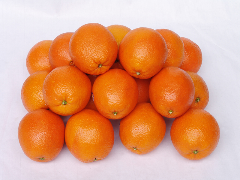 晴隆特产――脐橙资讯
