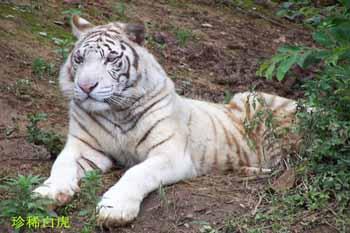 贵阳森林野生动物园-白虎山