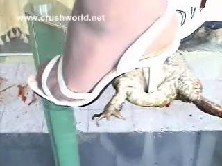杀完了猫杀完了狗又改杀青蛙了!!!