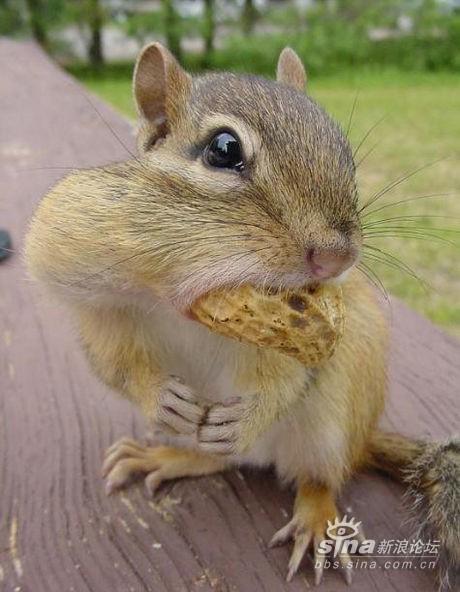 超级可爱小动物照片