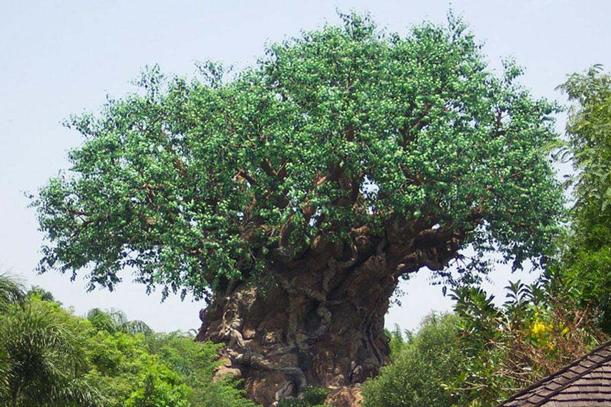 世界上最惊世骇俗的一棵大树