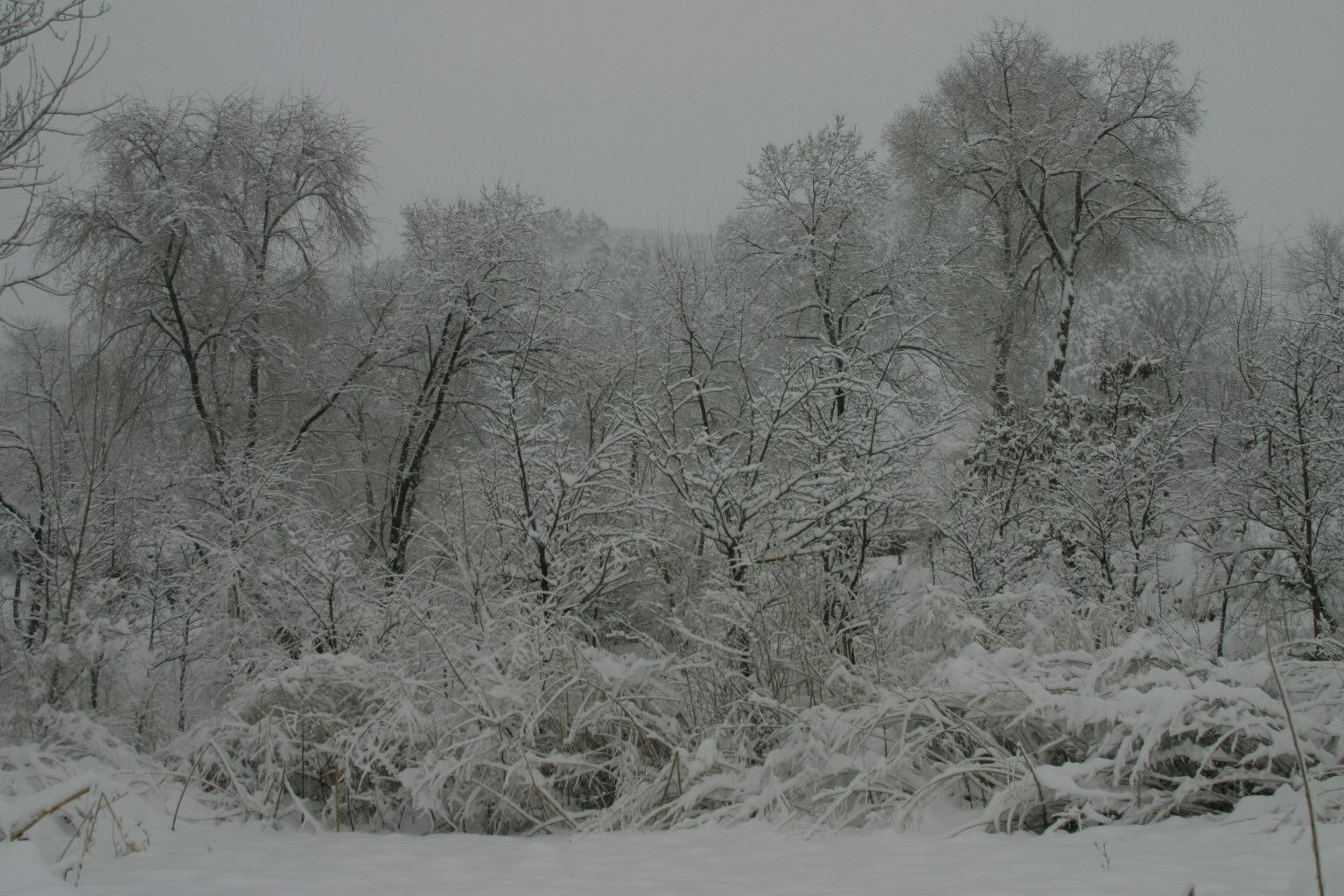 微信头像蓝色风景树雪