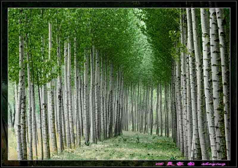 美丽绿色风景电脑主题