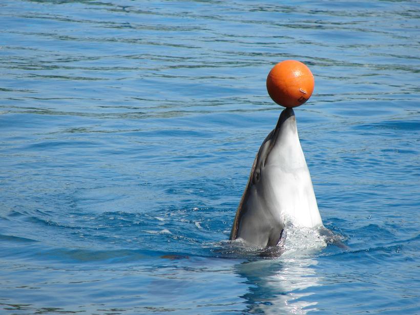 [原创]乐岛海豚表演