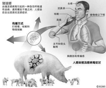 [转贴]防范猪流感12问 勤洗手少扎堆保证睡眠(组图)