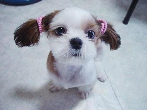 [贴图]超级可爱的小动物!